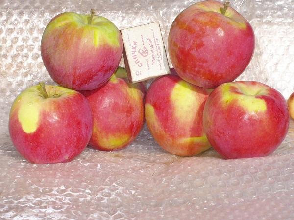 Яблоня анис пурпуровый описание фото отзывы